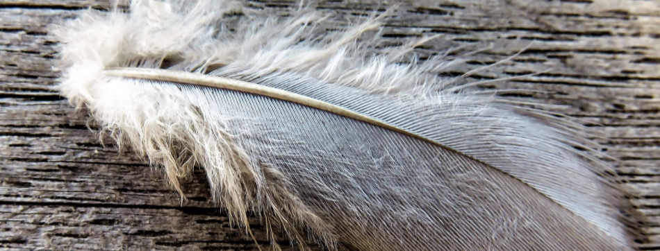 feather on roof