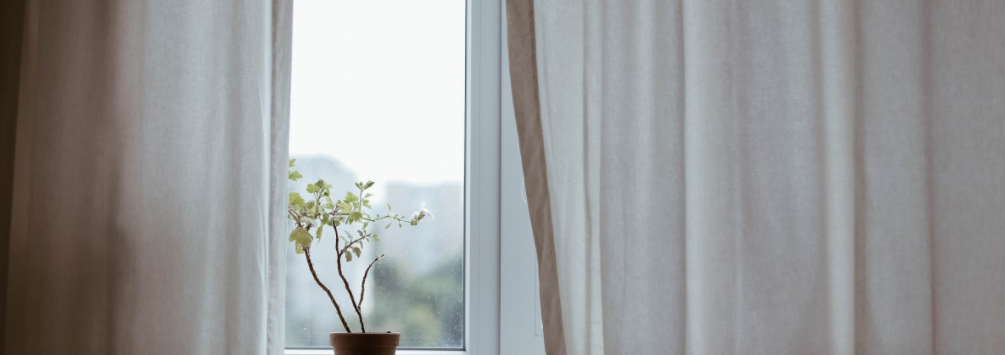 Window Plant and Curtains