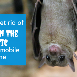 How To Get Rid Of Bats In The Attic Of Your Mobile Home