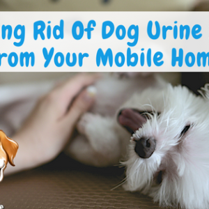 Getting Rid Of Dog Urine Smell From Your Mobile Home