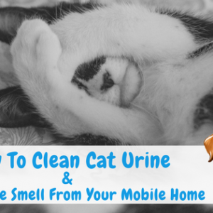 How To Clean Cat Urine & Remove The Smell From Your Mobile Home