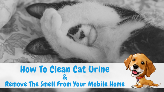 How To Clean Cat Urine Remove The Smell From Your Mobile