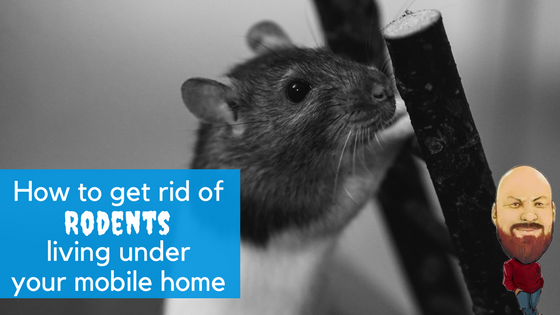 "Featured Image for ""How To Get Rid Of Rodents Living Under Your Mobile Home"" blog post"