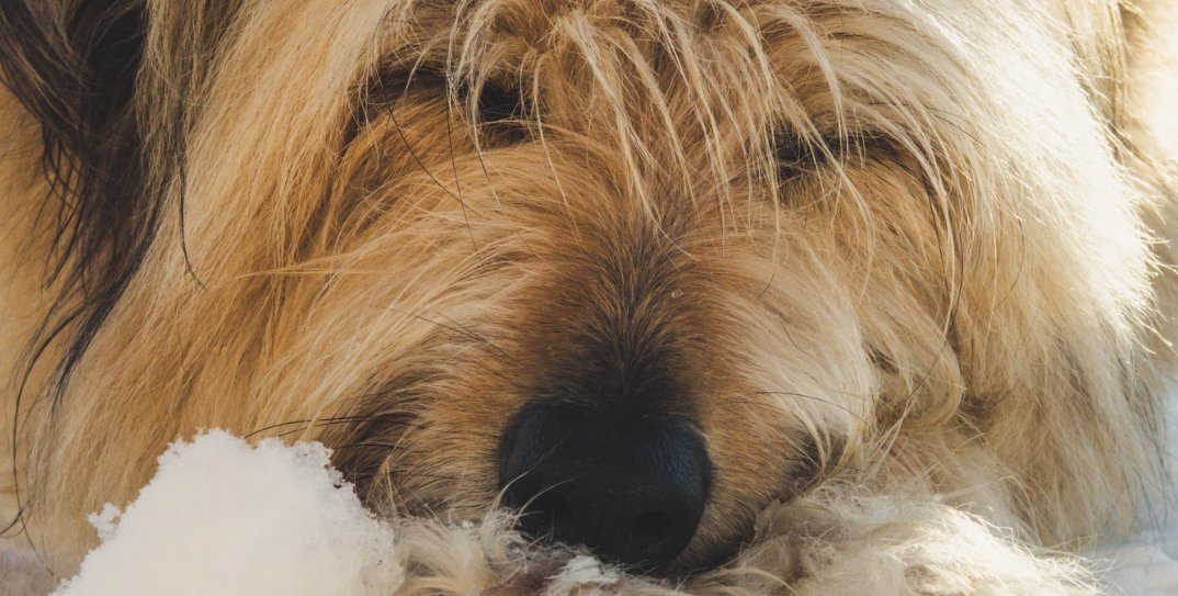 Moving Or Selling? Here's How To Remove Old Pet Stains From
