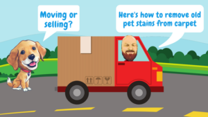 Moving Or Selling? Here's How To Remove Old Pet Stains From Carpet