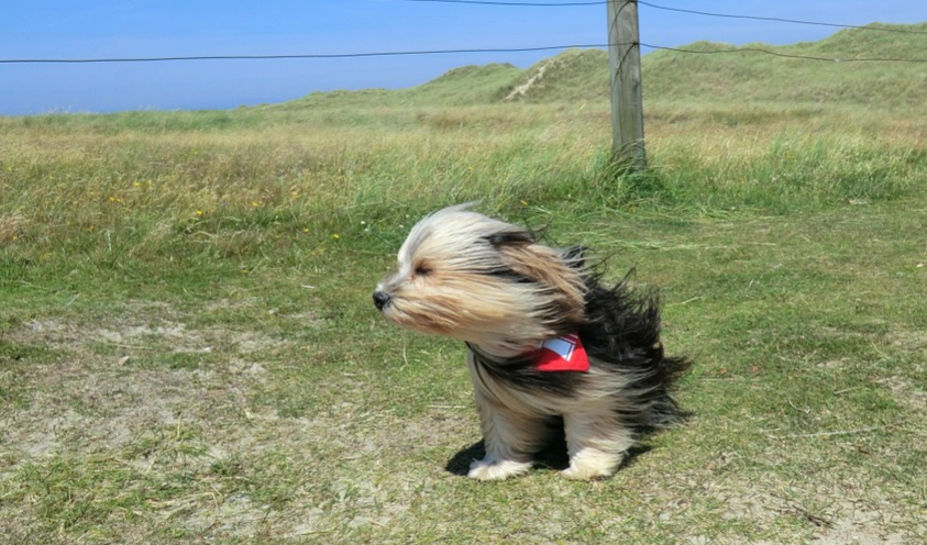 a dog sitting outside with strong wind blowing