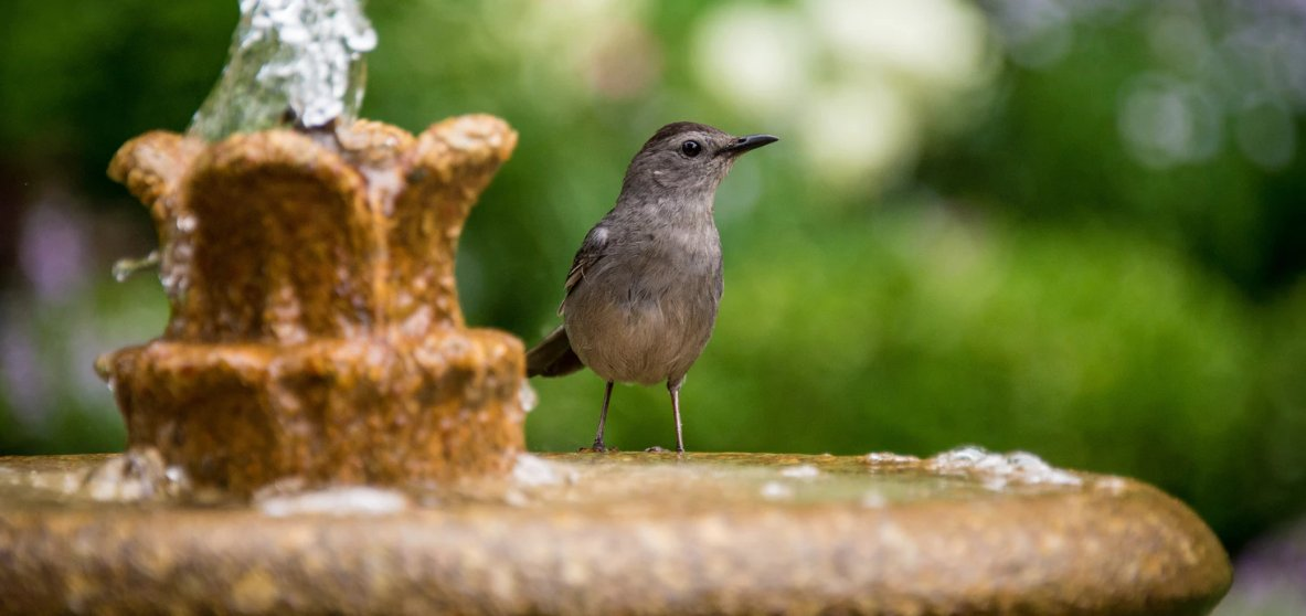 A bird sitting on the rim of a birdbath fountain bowl