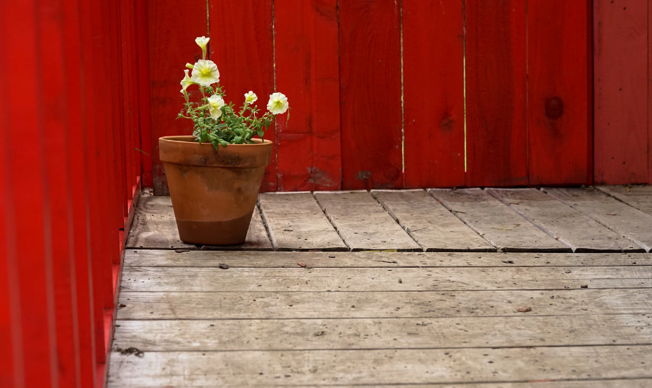 A potted plant on dry deck