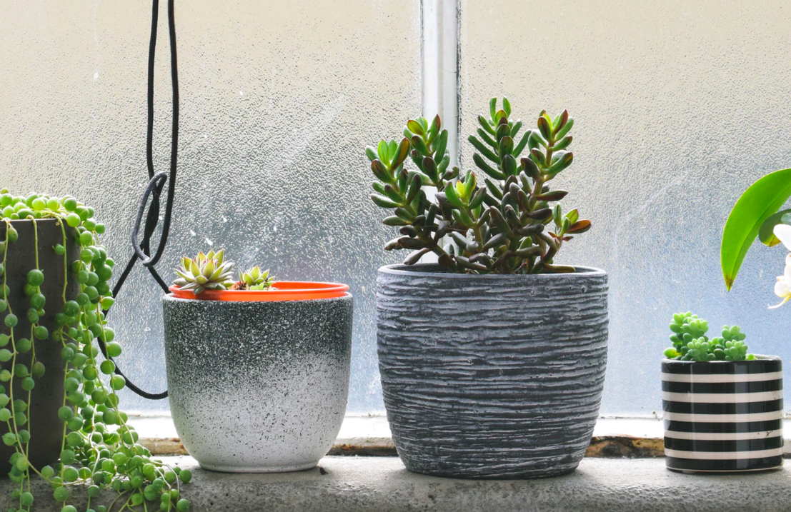 Succulent plants on window sill